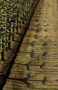 0019_Poiriers-en-fleur_Potager-du-Roi_Versailles_Jacques-de-Givry