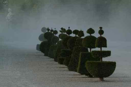 0032_Topiaires_poussiere_Versailles_Jacques-de-Givry