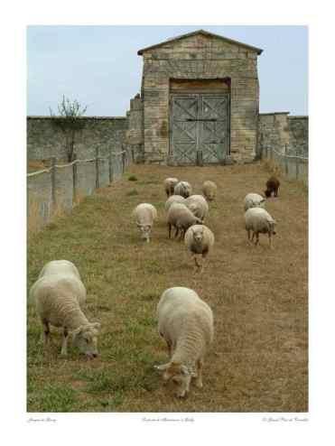 0049_Moutons_Porte-de-Maintenon_ Gally_Versailles_Nature_Jacques-de-Givry