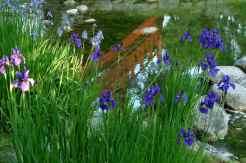 0055_jardin-albert-Kahn_Boulogne_Hauts-de-Seine_Jacques-de-Givry