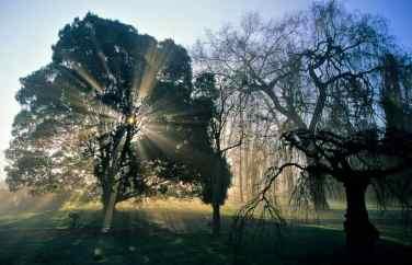0058_Rayons-solaires_Chene-feuilles-de-myrsine_arboretum-vallee-aux-Loups-Chatenay_Hauts-de-Seine_Jacques-de-Givry