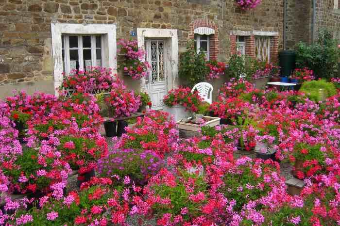 0061-geraniums_Pyre-sur-Seiche_Jacques-de-Givry