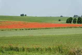 0070_paysage-de Moulineaux_Printemps_Plaine-de-Versailles_Jacques-de-Givry