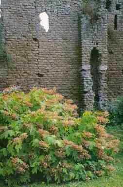 0120_Jardin-de-Ninfa_Latium_Italie_Jacques-de-Givry