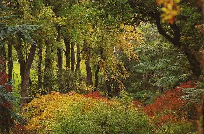0121_Bois-des Moutiers_Varengeville_Jacques-de-Givry