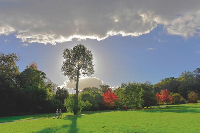 0152_Avant l'orage_arboretum Vallée aux Loups_Châtenay_Hauts-de-Seine_Jacques de Givry